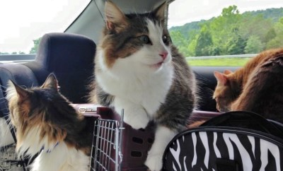 Lessons from the Road Trip with 3 Cats