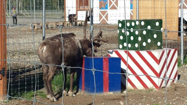 Santa Claus House North Pole Alaska sulky reindeer