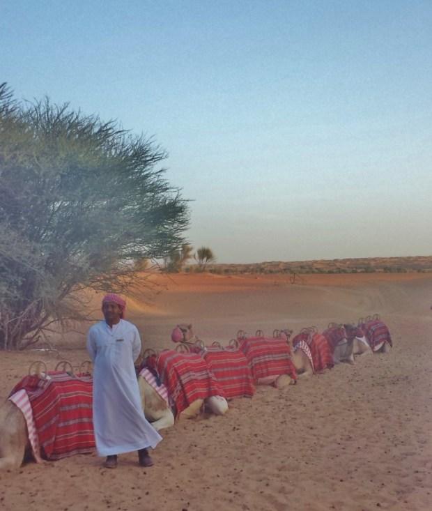 camel train al maha resort dubai