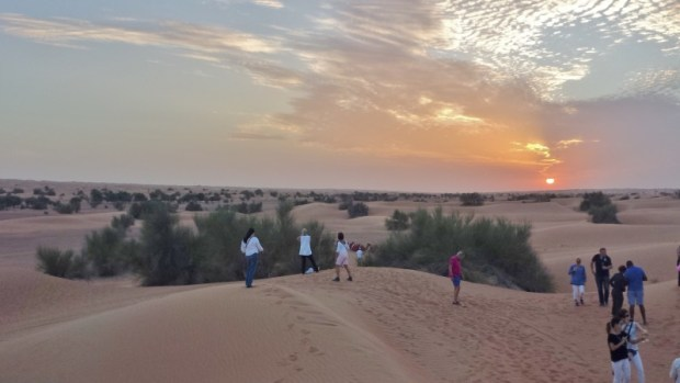 Al maha desert resort camel ride group at sunset