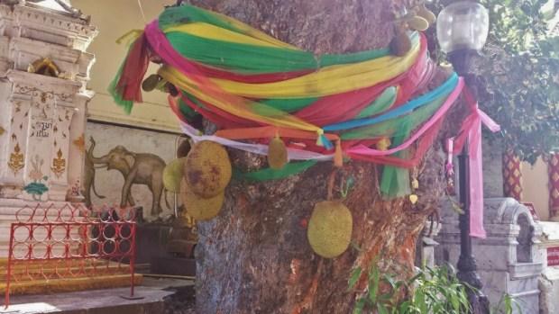 Wat Phra That Doi Suthep tree