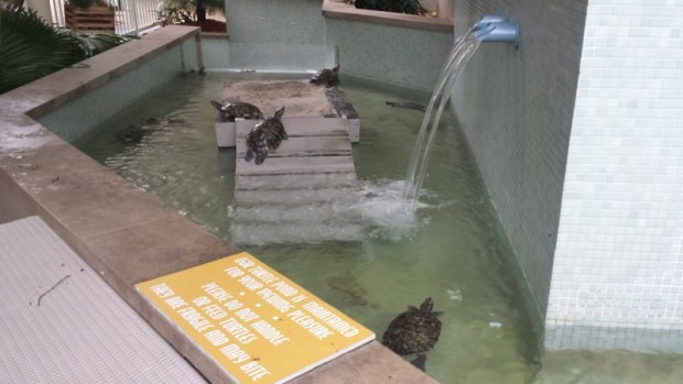 Hyatt Key West Turtle Pools