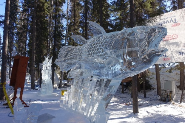 Fairbanks Ice Park Ice Scuplture Championships fish