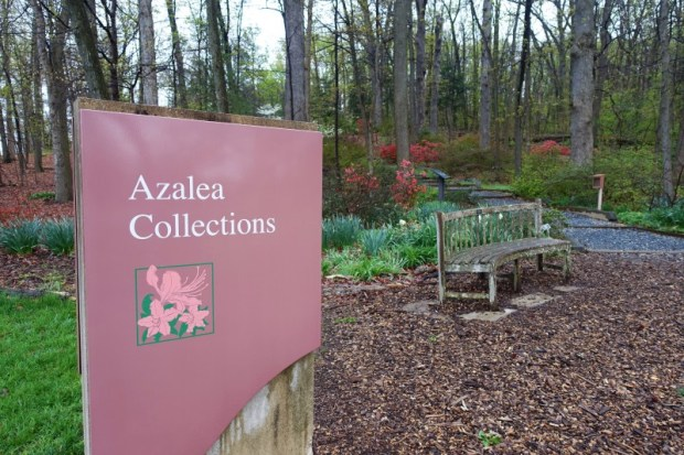 National Arboretum DC Azalea Garden