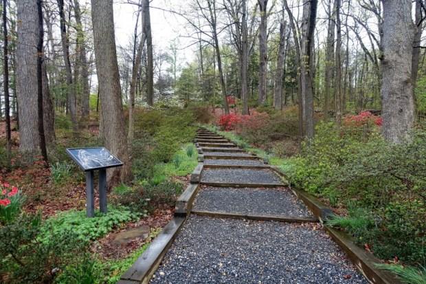National Arboretum DC Azalea path
