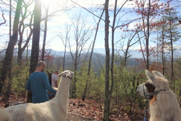 smoky-mountain-llama-treks-view-from-the-hike