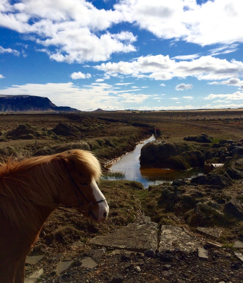 Eldhestar Horse Farm, Iceland