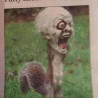 Zombie Squirrel in Nut of the Living Dead!