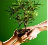 tb shvat4 1 - Tu Bishvat: dia feliz com muitos significados