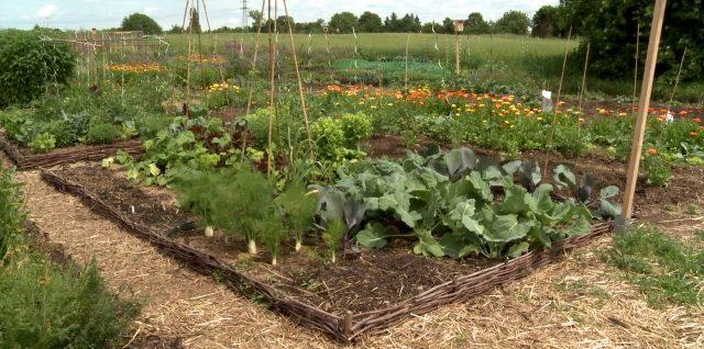 Mikrolandwirtschaft – selbst anbauen statt Supermarkt