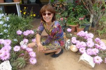 kaktusblute-heide