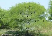 vogelreichtumii