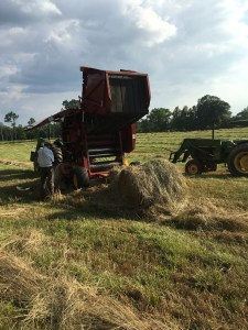 making-hay-at-proffitt