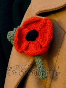 6th November 2013 - I'm not the best of knitters, I just can't seem to make it look neat! But I thought I'd have a go at knitting a Remembrance poppy, and it kind of turned out alright