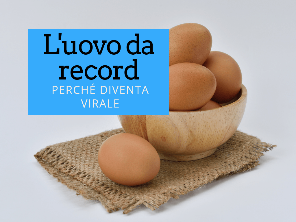 egg word record