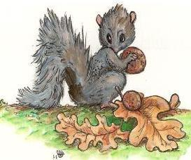 squirrel-with-acorn