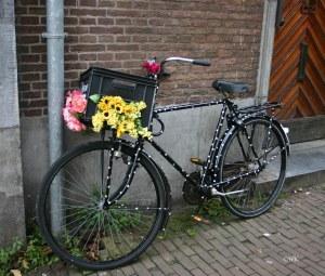 amsterdam-trans-6-copy