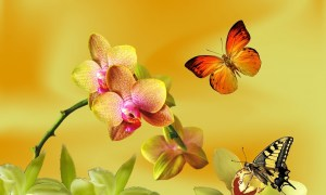 yellow-orchid-866668_1280