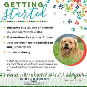 start using essential oils on dogs