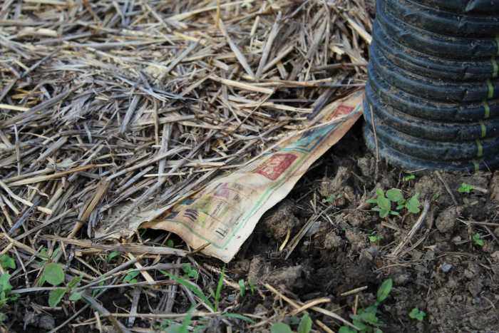 How to Banish Weeds and Bugs from your Successful Garden Organically 2
