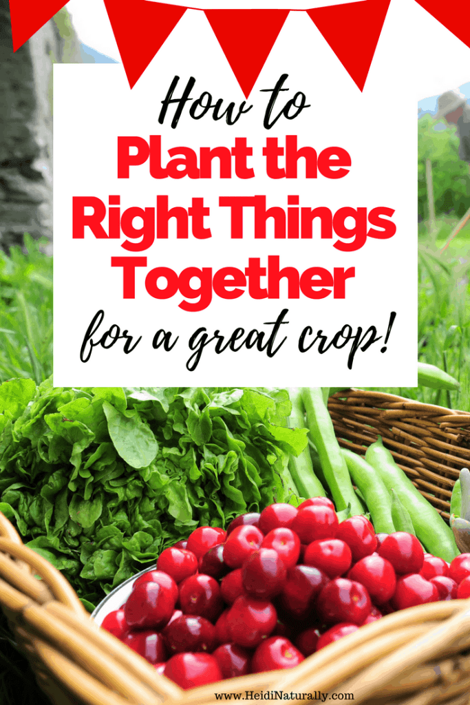 plant the right things together