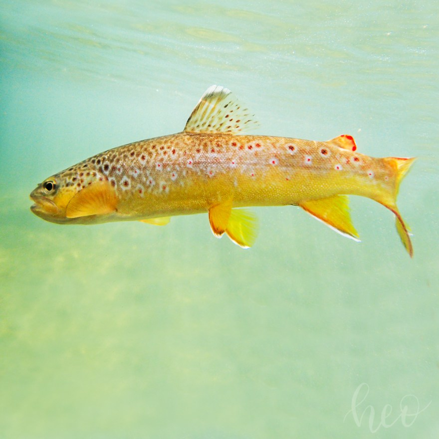 driftless fly fishing heidi oberstadt media photography