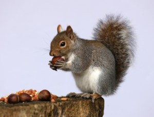 saving nuts for a rainy day
