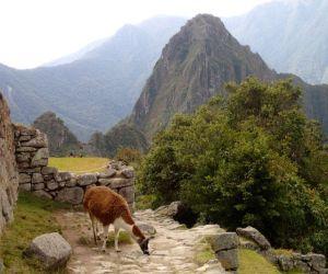 Machu_Picchu_View_with_Alpaca_Peru