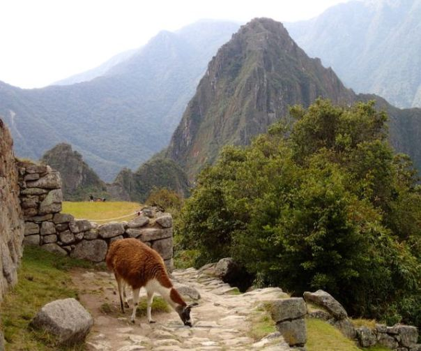 Machu_Picchu_View_with_Alpaca_Peru