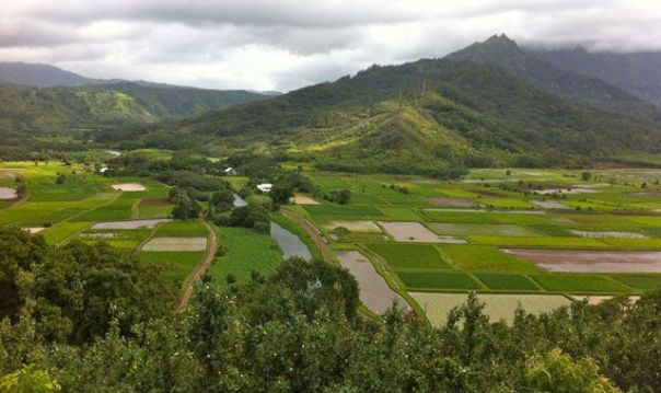 North_Shore_Kauai_Taro_Fields_by_Heidi_Siefkas