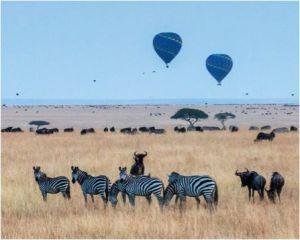 Zebras_in_the_wild