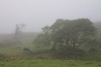 Burg auf Mull. David rettet sich an Land, aber das Wetter ist [hier schottischen Fluch einsetzen].