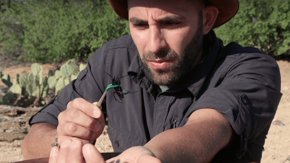 Coyote Peterson's wiki