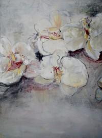 Phalaenopsis 60 x 80