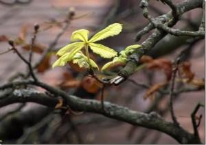 Grüne Blätter signalisieren den Sommer