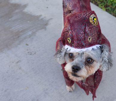 HalloweenDogs-6