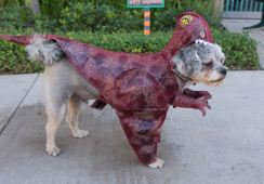 HalloweenDogs-7