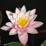 Lotus Qigong im Steinreich in Bremen