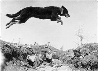 War Dog