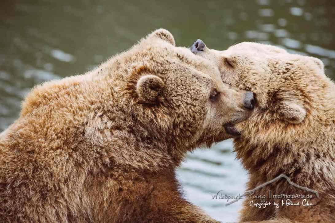 Die Braunbärenbande im Wildpark Poing
