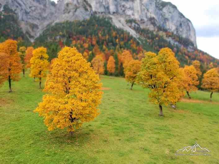 Der große Ahornboden im Herbst