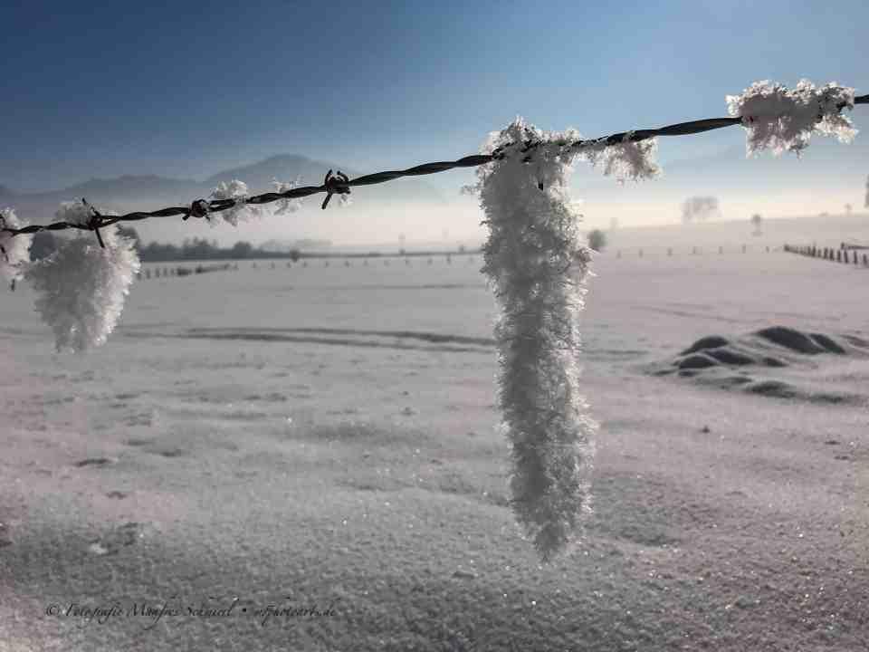 Schneekristalzapfen