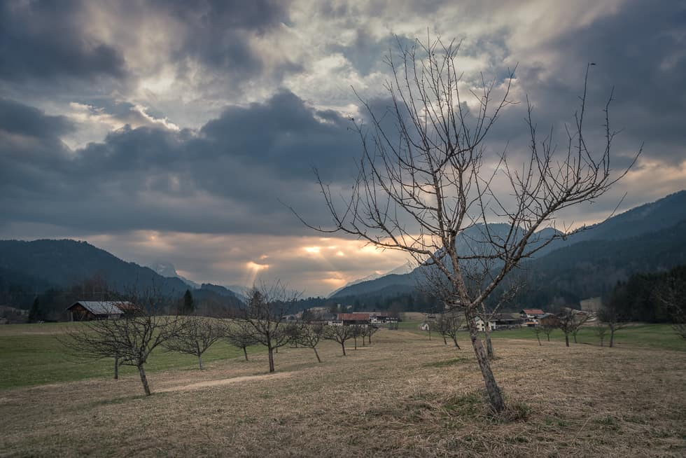 Krokuswiesen am Geroldersee, Sonnenuntergang mit Bäumen