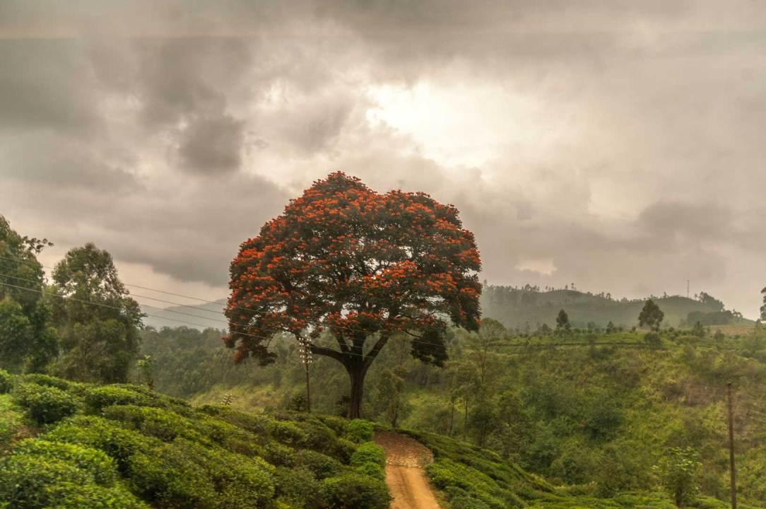 Acacia - Out of Cam
