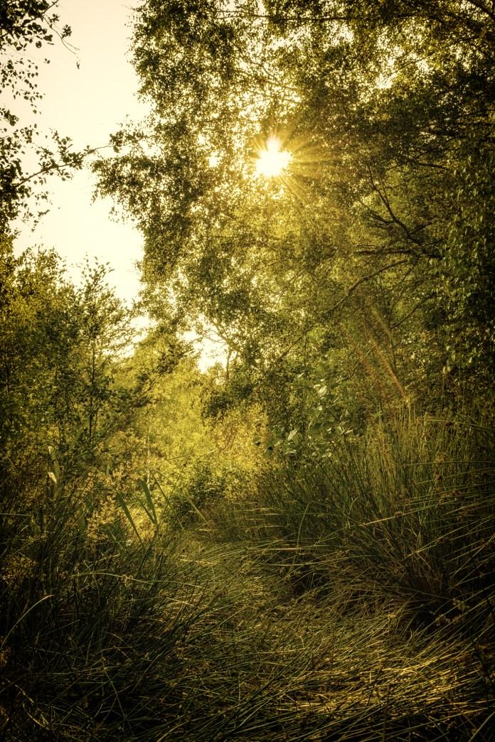 Die Sonne scheint auch auf Holzwege.