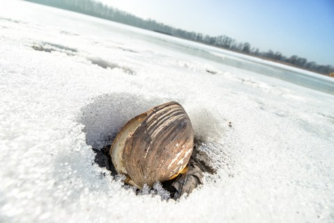Eis heimstoff fotografie for Goldfischteich im winter