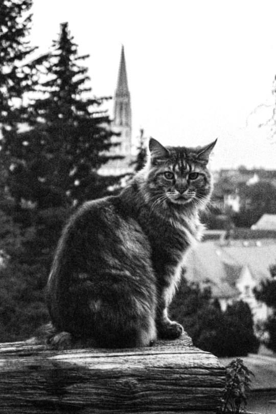 Meow-City.