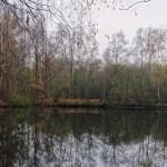Ein See auf dem Weg durch den schmalen Wald