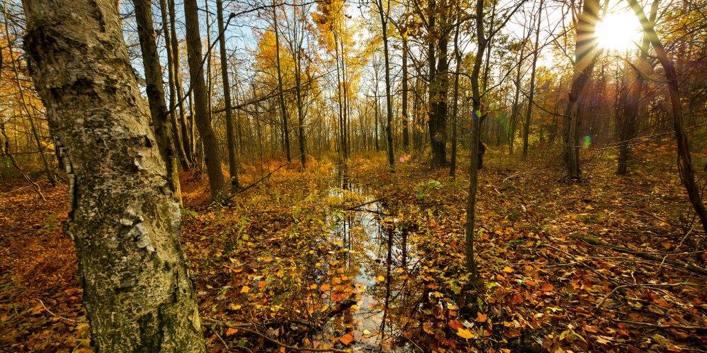 Ambler Flatwoods Nature Preserve