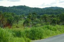 Palmen und Termiten